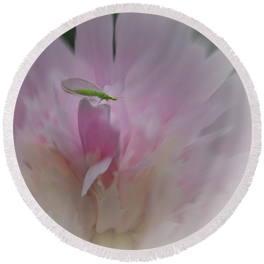Peony Round Beach Towel featuring the photograph Peony With Green Visitor by Patti Deters