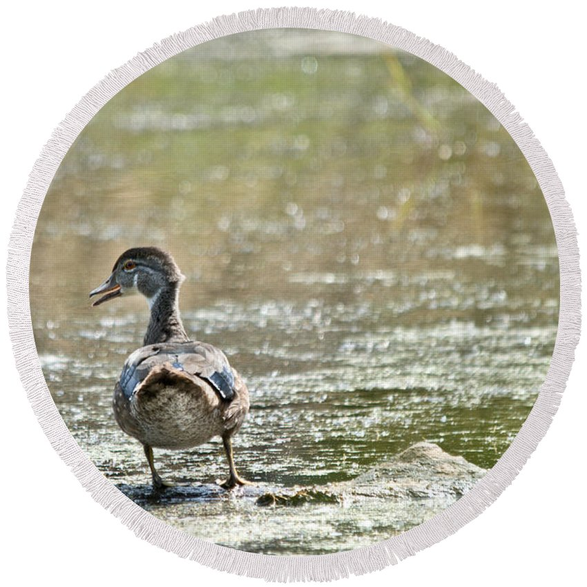 Wood Ducks Round Beach Towel featuring the photograph Perched Quacker by Cheryl Baxter