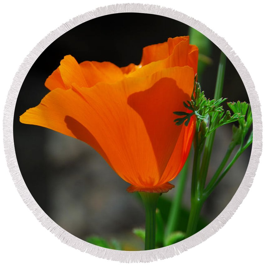 Poppy Round Beach Towel featuring the photograph Perfect Poppy by Lynn Bauer