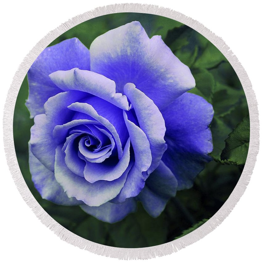 Periwinkle Rose Round Beach Towel featuring the photograph Periwinkle Rose by Barbara Griffin