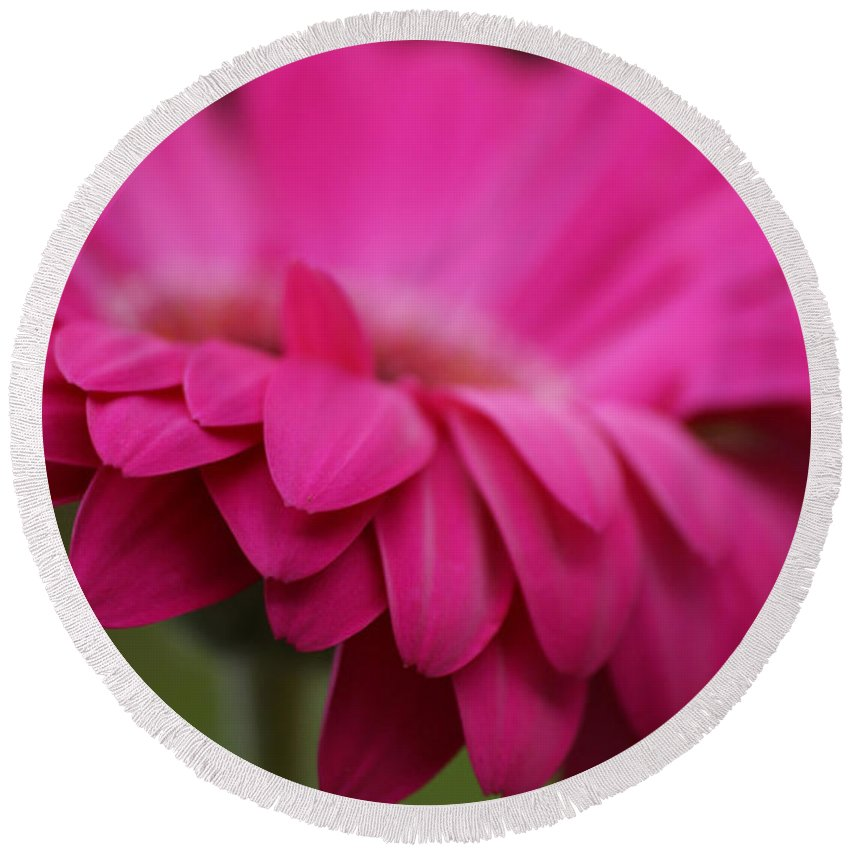 Pink Round Beach Towel featuring the photograph Petals Pink by Carol Lynch