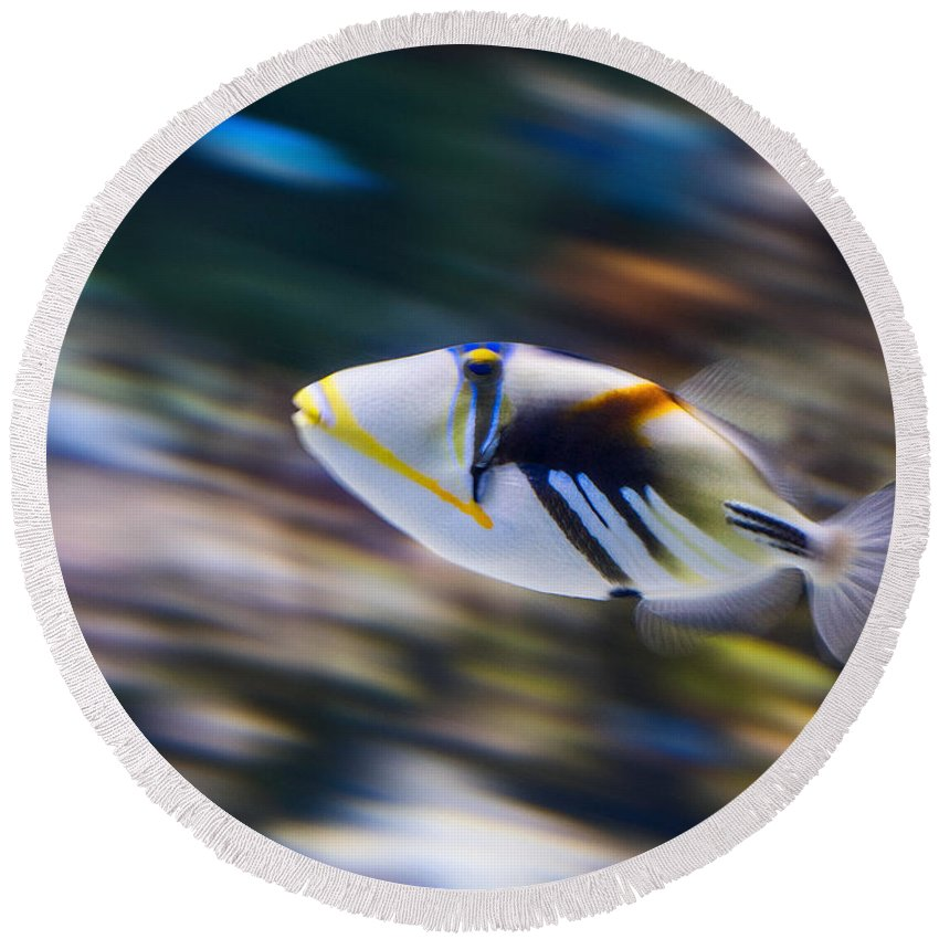 Rhinecanthus Aculeatus Round Beach Towel featuring the photograph Picasso - Lagoon Triggerfish Rhinecanthus Aculeatus by Jamie Pham