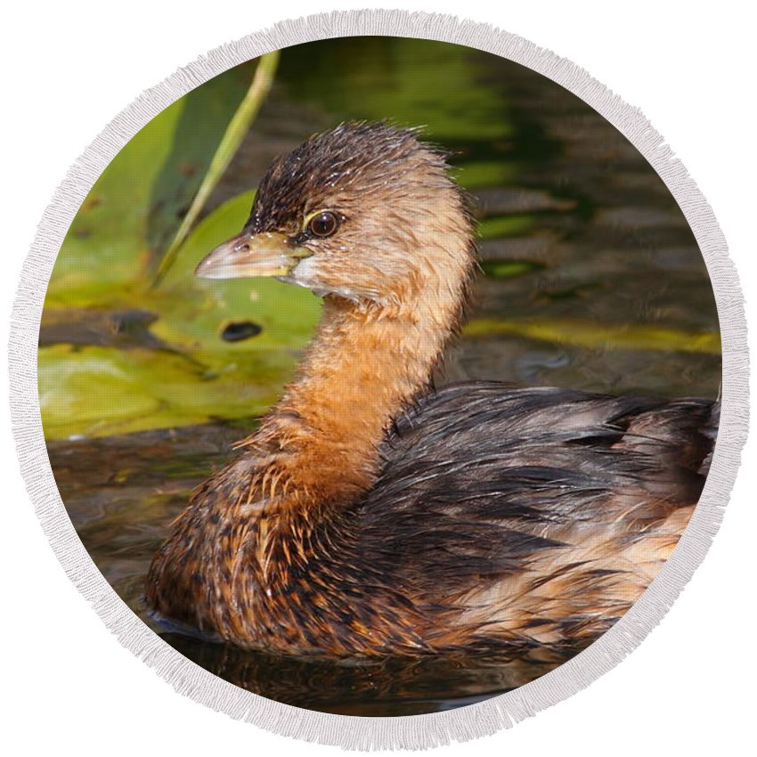 Grebe Round Beach Towel featuring the photograph Pied-billed Grebe by Bruce J Robinson