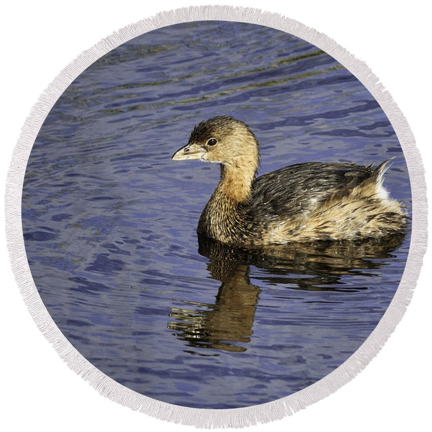 Bird Round Beach Towel featuring the photograph Pied-billed Grebe by Fran Gallogly