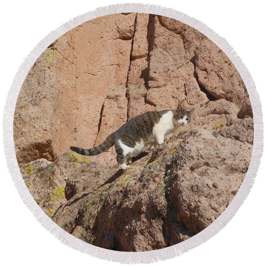Cat Round Beach Towel featuring the photograph Pierre The Mountain Climber by James Welch