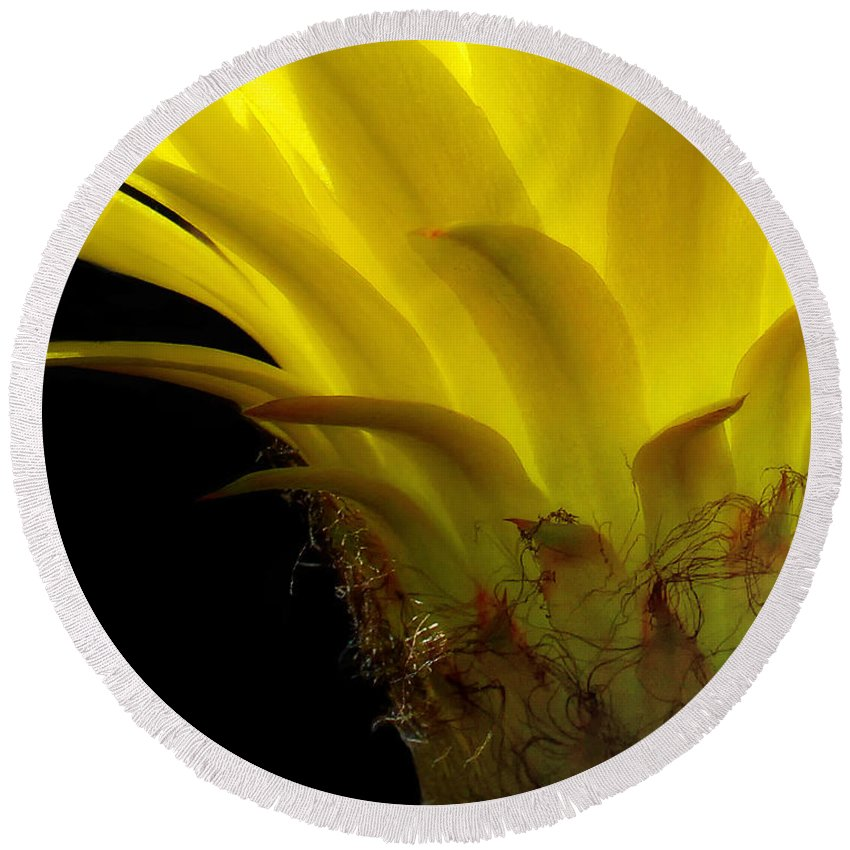 Cactus Round Beach Towel featuring the photograph Cactus Flower by Mike Nellums