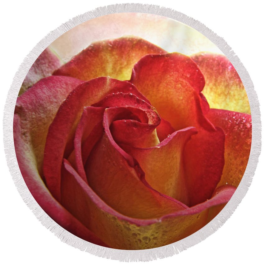 Dew Round Beach Towel featuring the photograph Pink And Yellow Rose With Water Drops by Debbie Portwood
