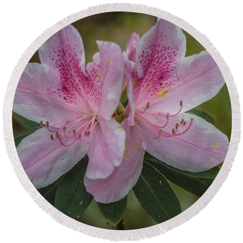 Florida Round Beach Towel featuring the photograph Pink Azalea by Jane Luxton