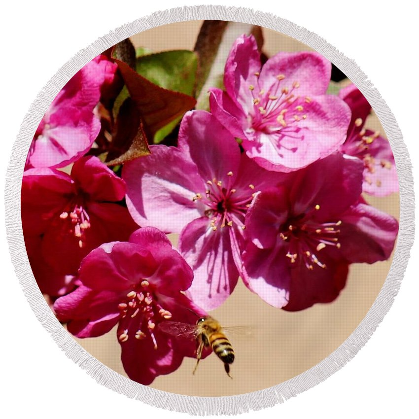 Spring Round Beach Towel featuring the photograph Bee Flying Pink Blossoms 031015a by Edward Dobosh