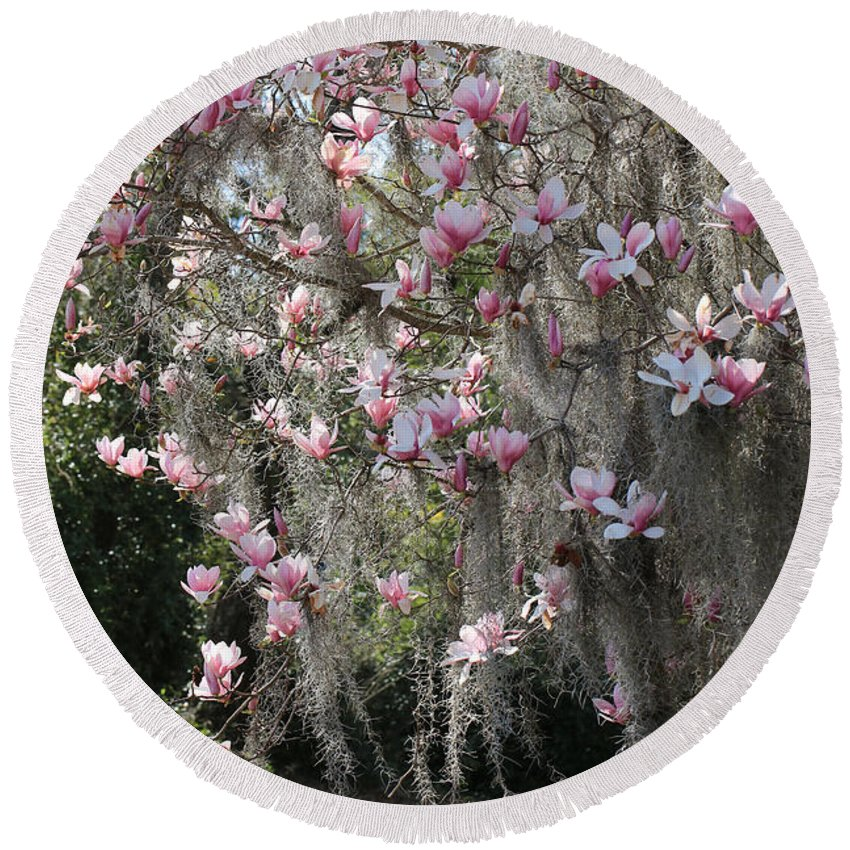 Saucer Magnolia Round Beach Towel featuring the photograph Pink Blossoms And Gray Moss by Carol Groenen