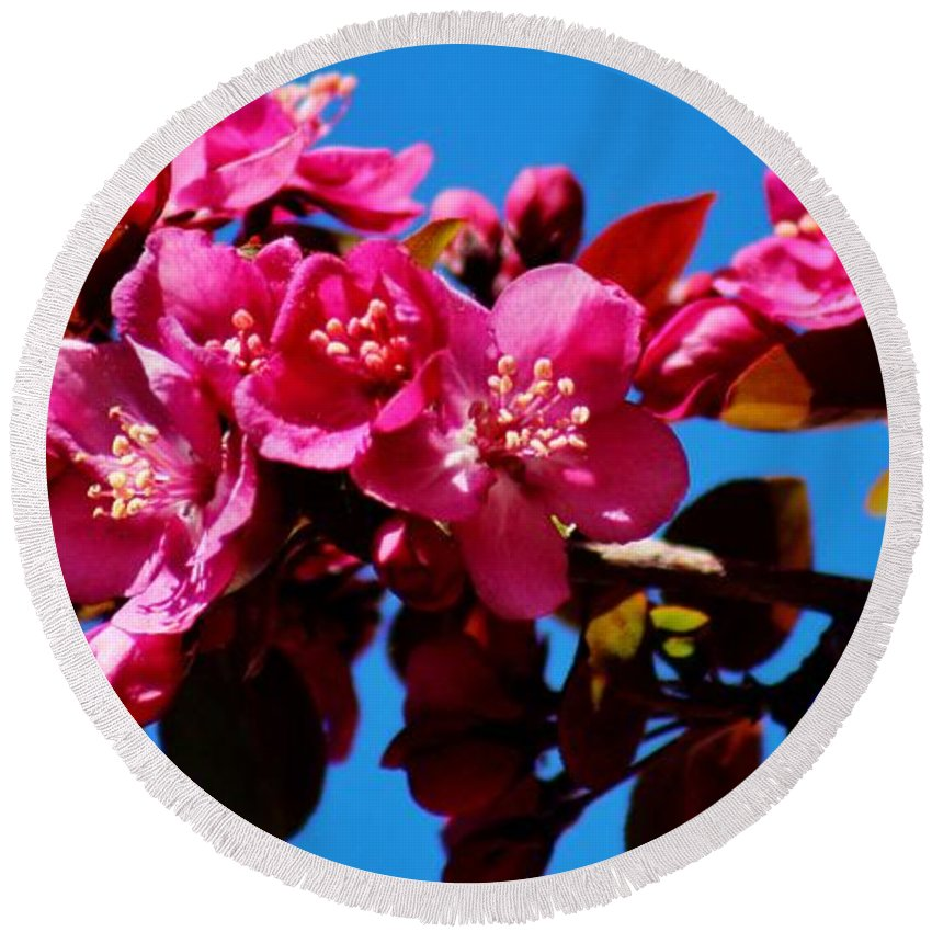 Wildlife Round Beach Towel featuring the photograph Pink Blossoms Closeup 031015a by Edward Dobosh