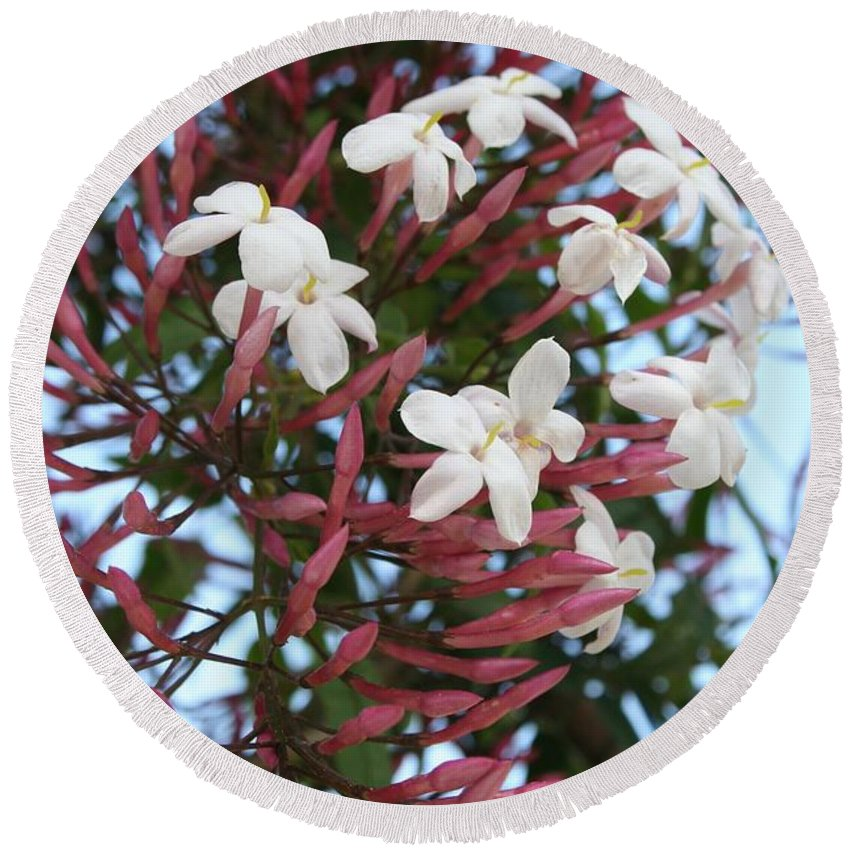 White Round Beach Towel featuring the photograph Pink Buds And Jasmine Blossom Close Up by Taiche Acrylic Art