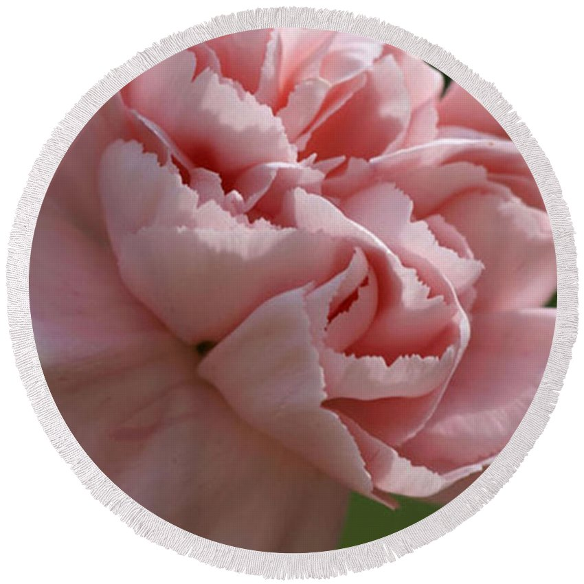 Pink Round Beach Towel featuring the photograph Pink Carnation by Carol Lynch