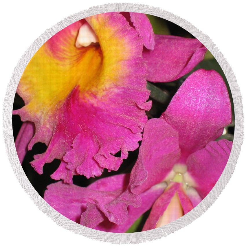 Orchid Round Beach Towel featuring the photograph Pink Cattleya Orchid by Hope VanCleaf