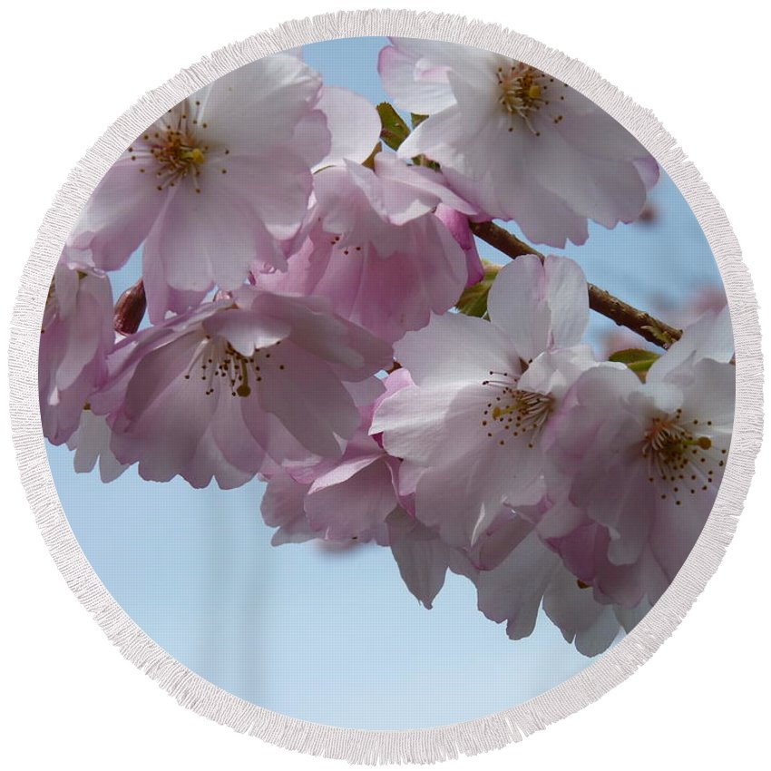Spring Round Beach Towel featuring the photograph Pink Cherry Blossom by Lena Photo Art
