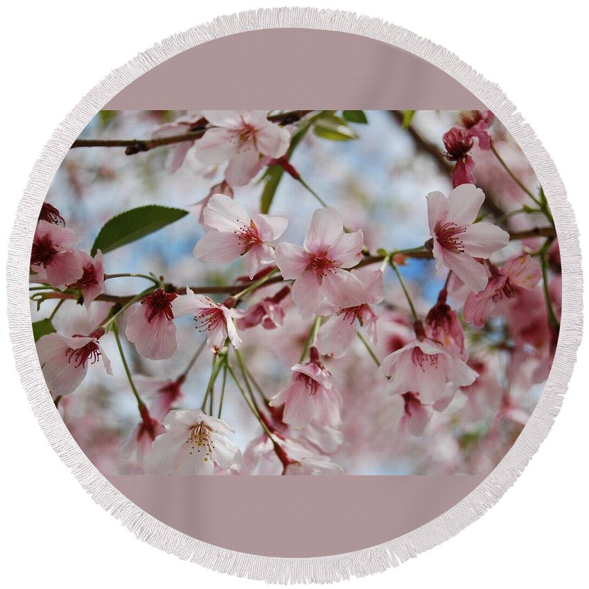Pink Round Beach Towel featuring the photograph Pink Cherry Blossoms by Jocelyn Friis
