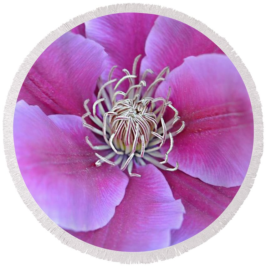 Clematis Macro Round Beach Towel featuring the photograph Pink Clematis Beauty by Peggy Franz