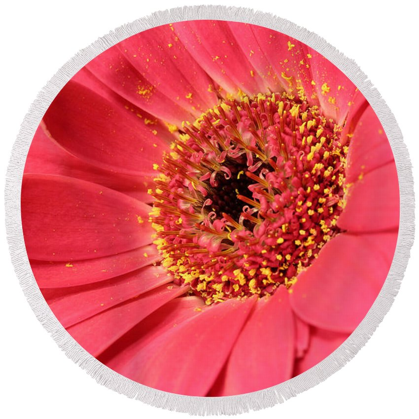 Abloom Round Beach Towel featuring the photograph Pink Daisy by Paul Fell