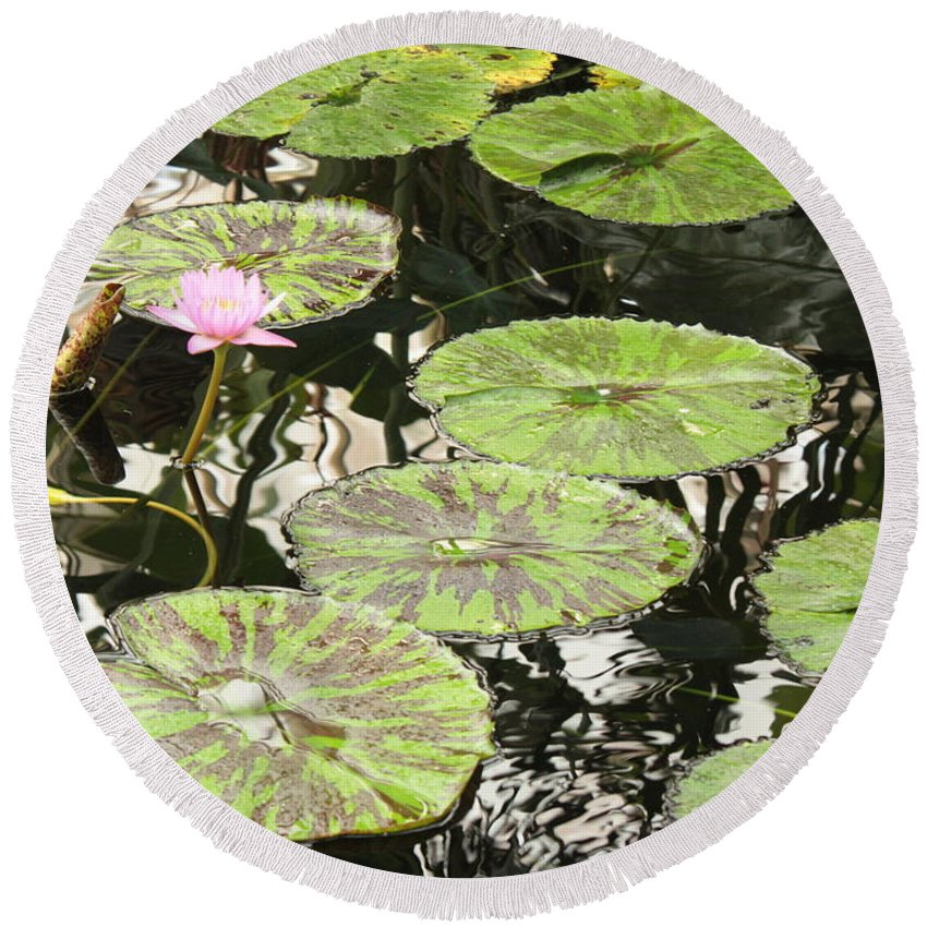 Pond Round Beach Towel featuring the photograph One Pink Water Lily With Lily Pads by Carol Groenen
