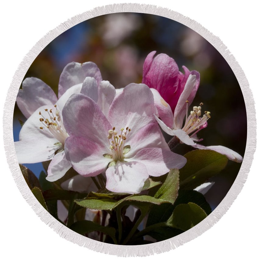 Pink Round Beach Towel featuring the photograph Pink Flowering Crabapple Blossoms by Kathy Clark