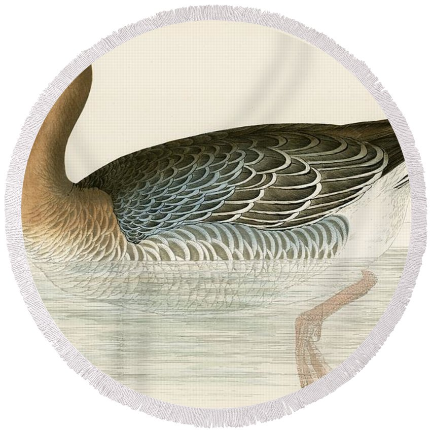 Birds Round Beach Towel featuring the painting Pink Footed Goose by Beverley R Morris