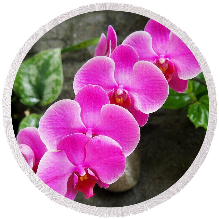 Nature Round Beach Towel featuring the photograph Pink Fuchsia Tropical Orchid Flowers In The Garden by Amy McDaniel