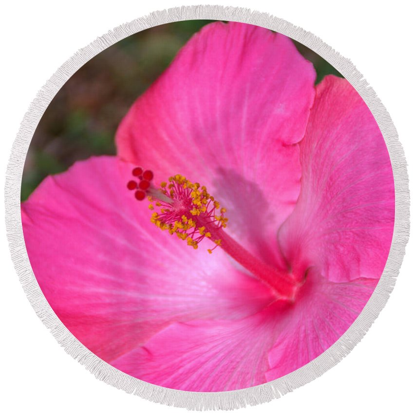 Fine Art Pink Hibiscus Flower Plant Of Kauai Hawaii Round Beach Towel featuring the photograph Pink Hibiscus by Brian Harig