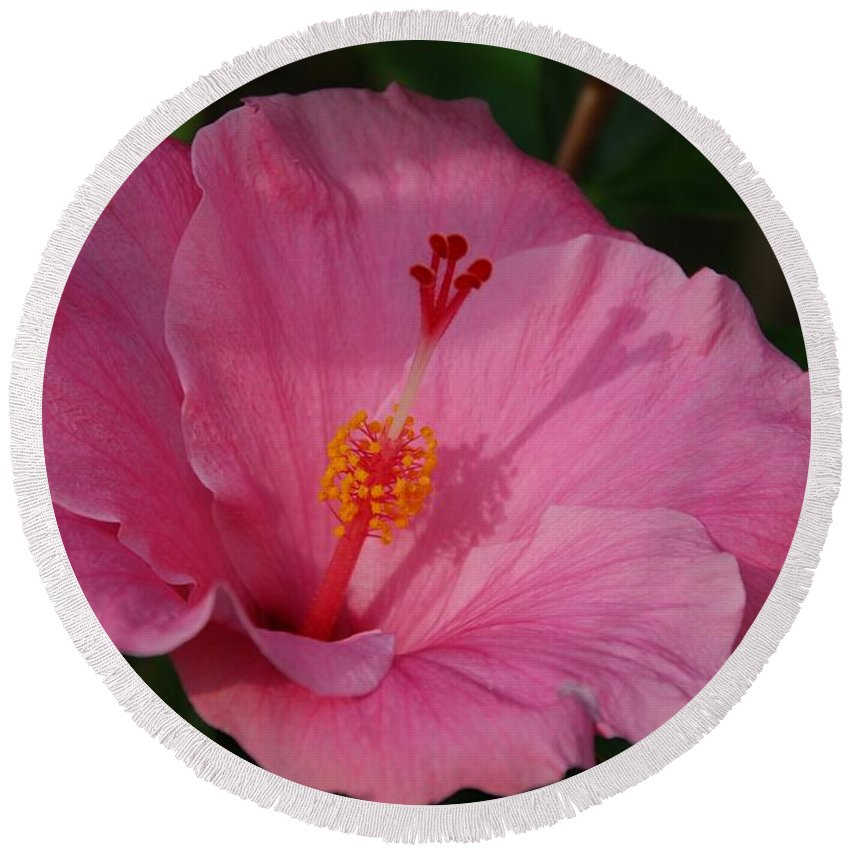 Flower Round Beach Towel featuring the photograph Pink Hibiscus by Eric Tressler