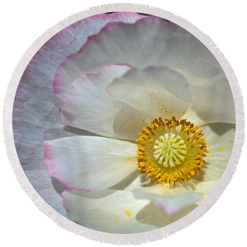 White Poppy Round Beach Towel featuring the photograph Pink Laced White Poppy by Tikvah's Hope