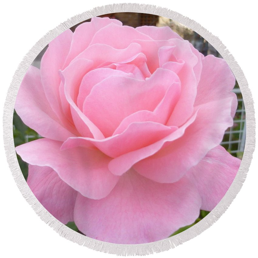 Rose Photograph Round Beach Towel featuring the photograph Pink Lady by Lingfai Leung