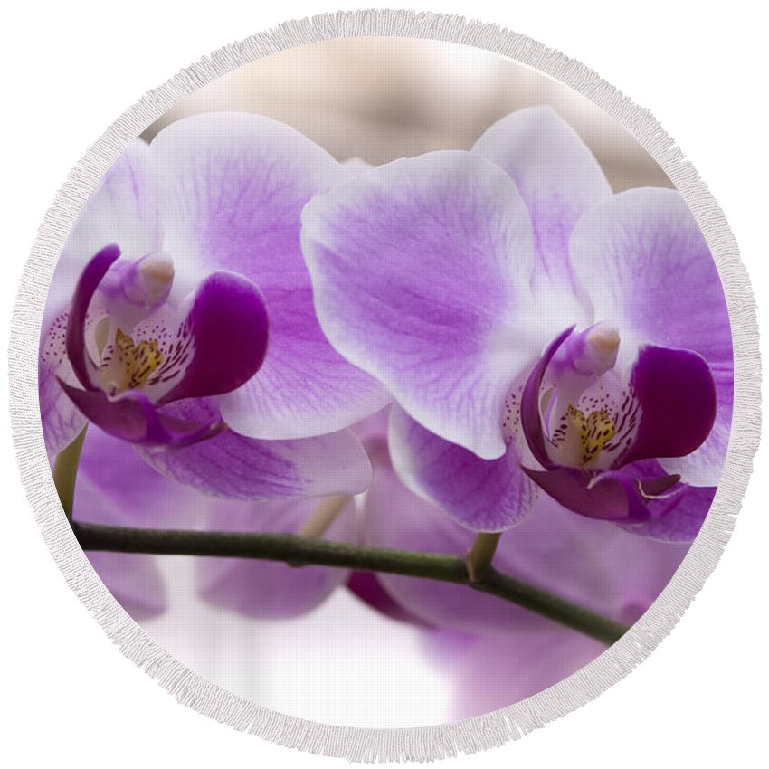 Pink Orchid Round Beach Towel featuring the photograph Pink Orchid by Saija Lehtonen
