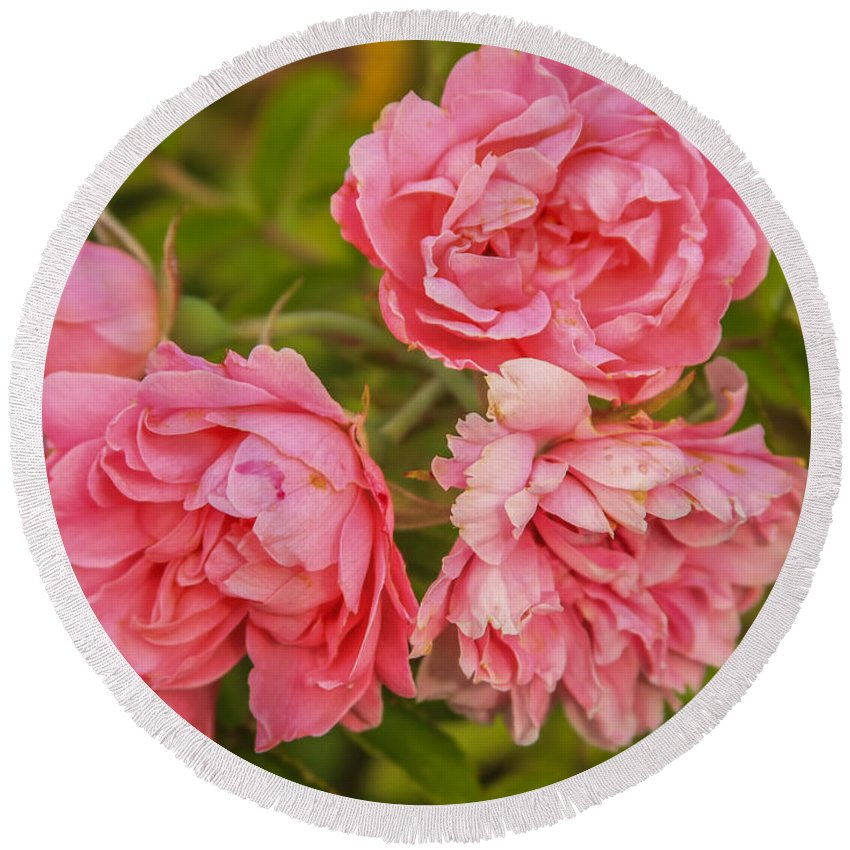 Flower Round Beach Towel featuring the photograph Pink Peonies by Jane Luxton