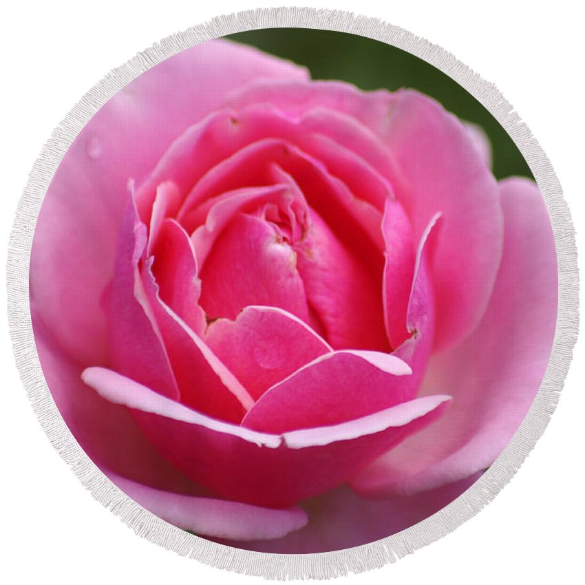 Rose Round Beach Towel featuring the photograph Pink Rose 08 by J M Lister