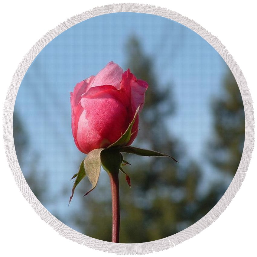 Flower Round Beach Towel featuring the photograph Pink Rose And Trees by Lorna Hooper