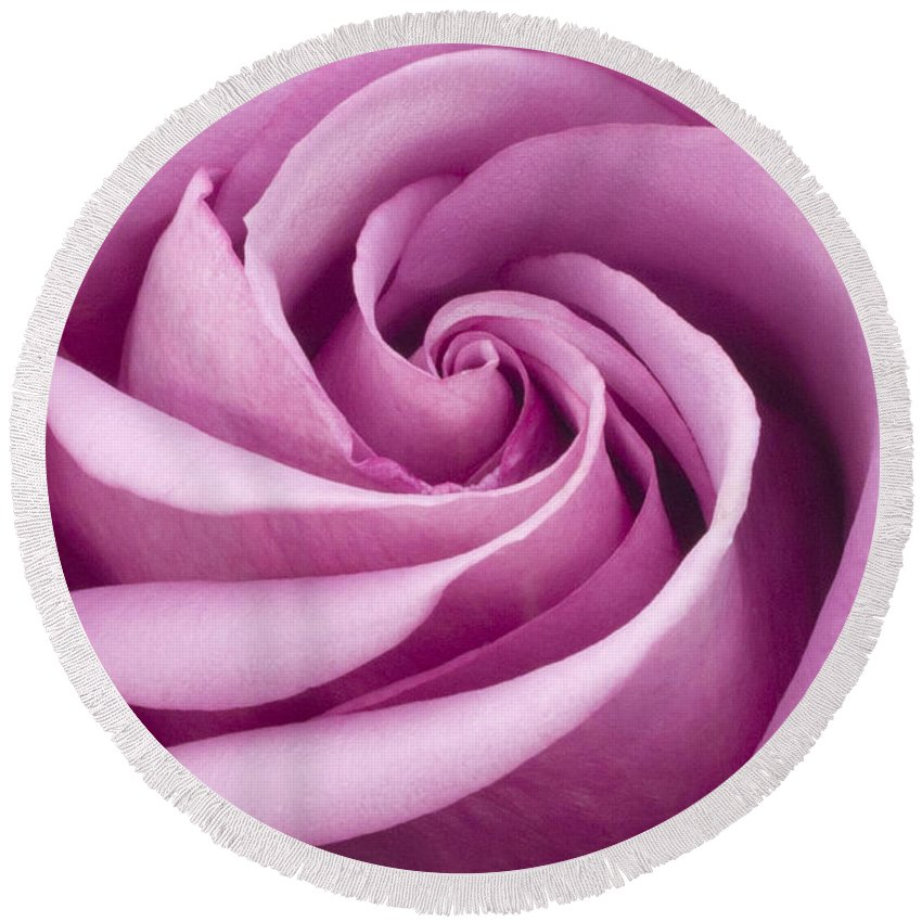 Pink Rose Closeup Round Beach Towel featuring the photograph Pink Rose Folded To Perfection by Sandra Foster