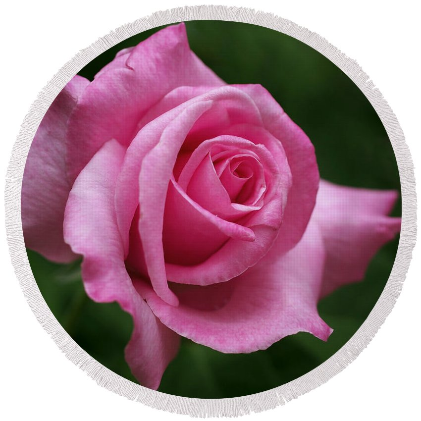 Rose Round Beach Towel featuring the photograph Pink Rose Perfection by Rona Black