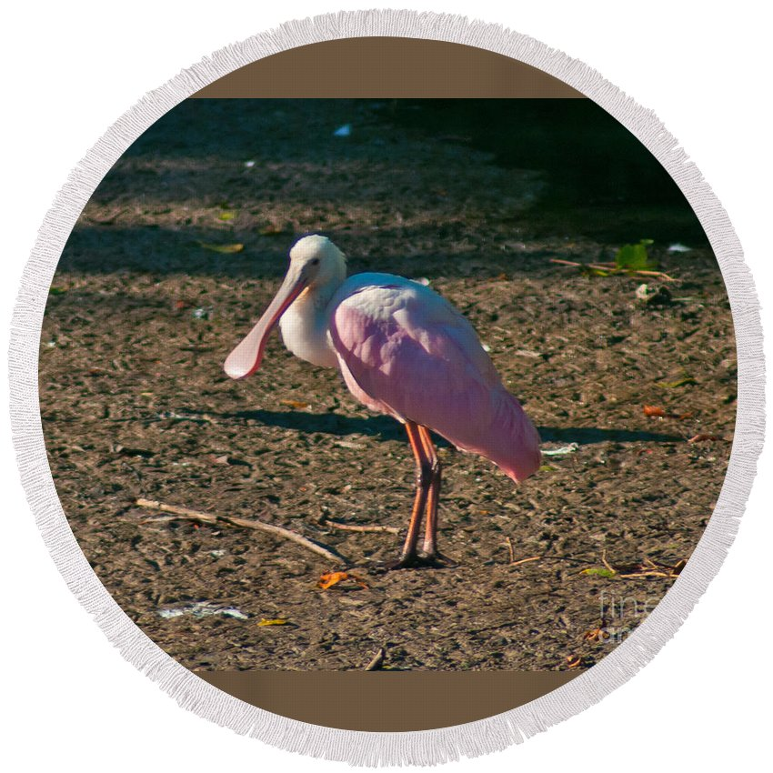 Spoonbill Round Beach Towel featuring the photograph Pink Spoonbill In The Sun by Stephen Whalen