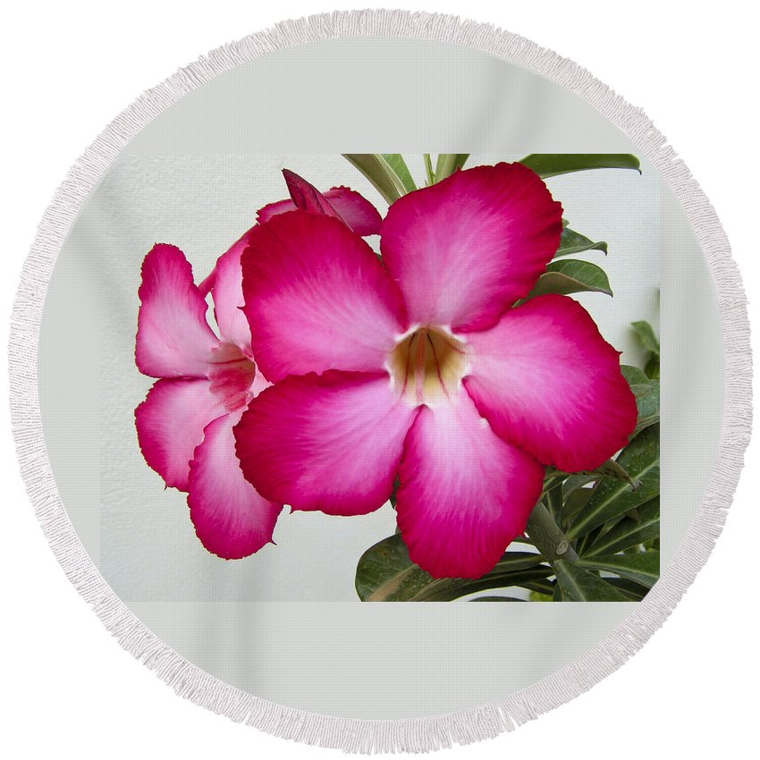 Lovejoy Round Beach Towel featuring the photograph Pink Star Flower by Lovejoy Creations