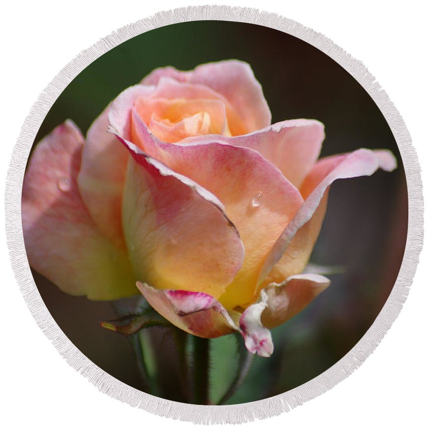 Rose Round Beach Towel featuring the photograph Pink Yellow Rose 01 by J M Lister