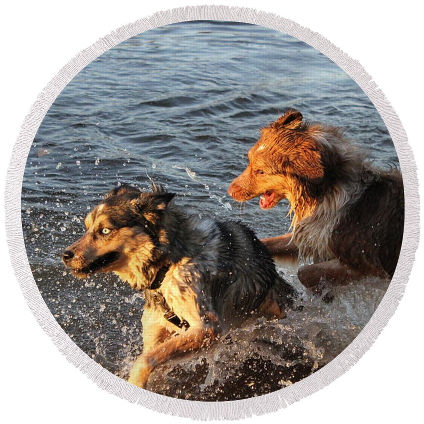 Dogs Round Beach Towel featuring the photograph Playing Intensely by Alanna DPhoto