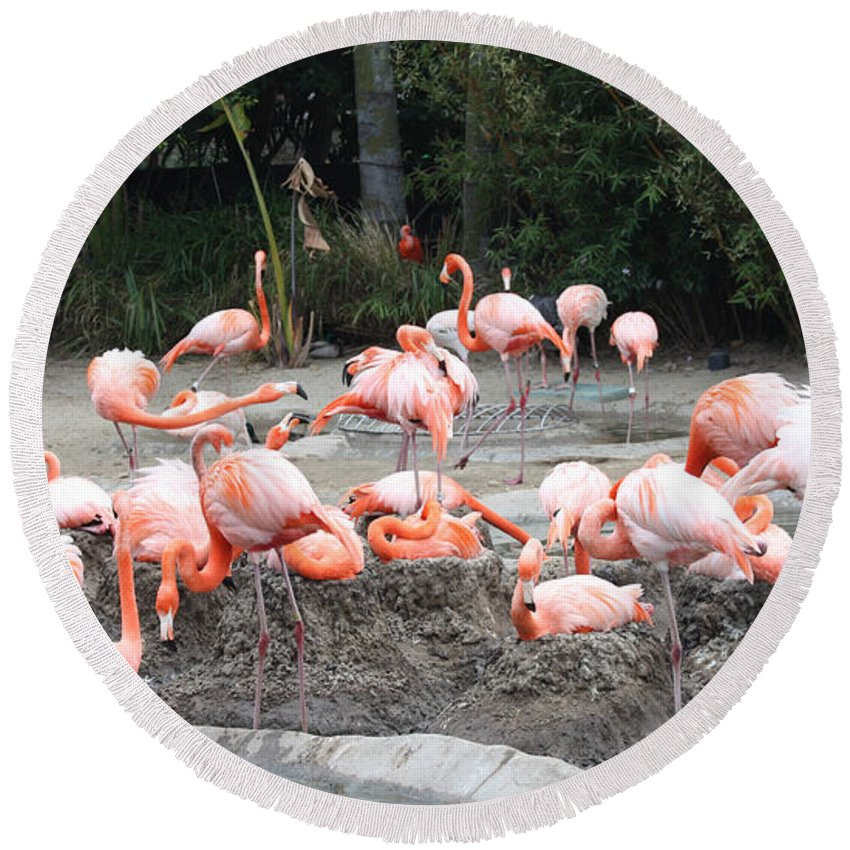 Plenty Of Pink Round Beach Towel featuring the photograph Plenty Of Pink by John Telfer