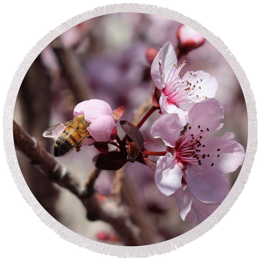 Floral Round Beach Towel featuring the photograph Plum Blossoms 12 by Kume Bryant