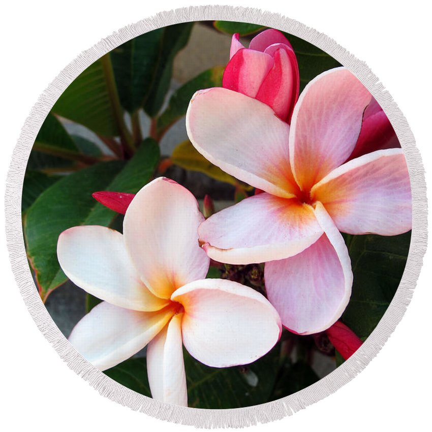 Flower Round Beach Towel featuring the photograph Plumeria by Kelly Holm
