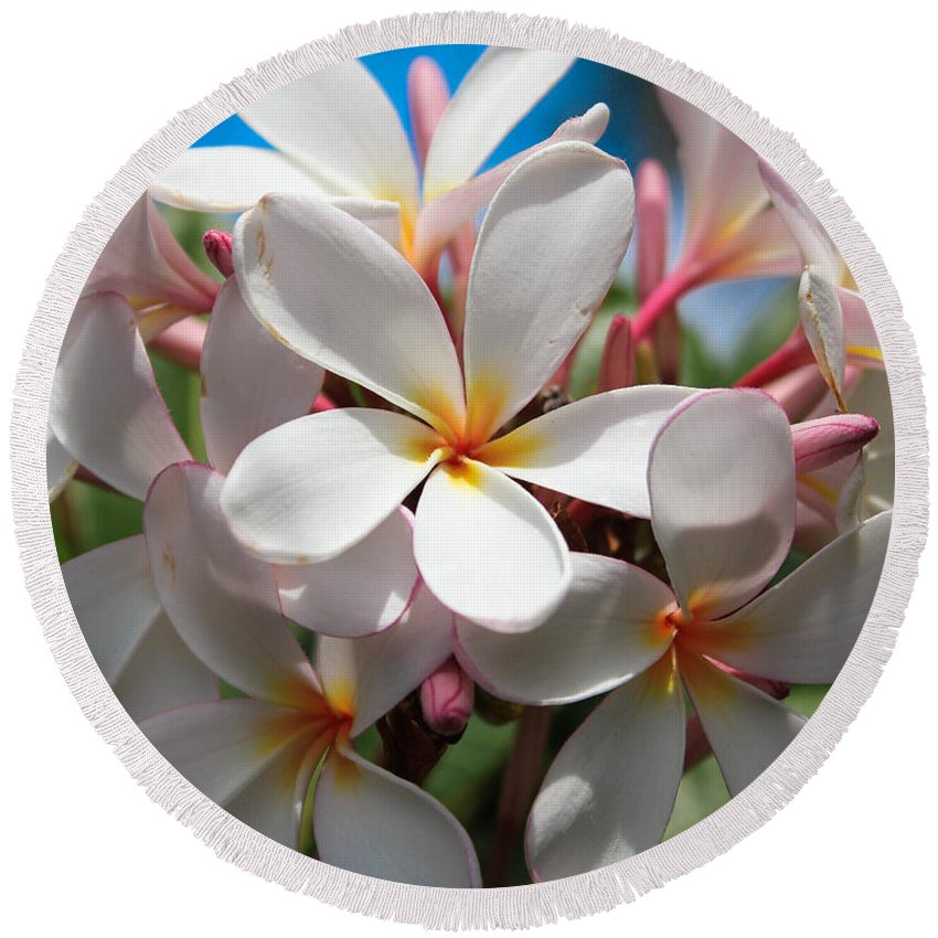 Flower Round Beach Towel featuring the photograph Plumerias Under A Blue Sky by Veronika Gaudet