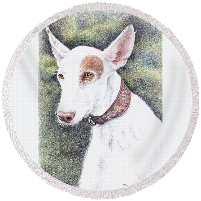 Dog Round Beach Towel featuring the drawing Podenco Ibicenco by Nicole Zeug