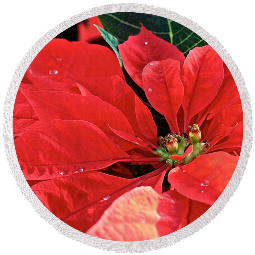 Flower Round Beach Towel featuring the photograph Poinsettia Diamonds by Susan Herber