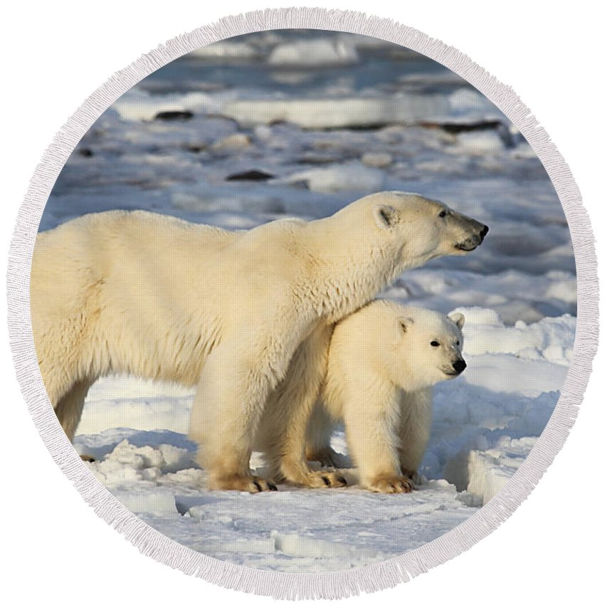 Polar Bears Round Beach Towel featuring the photograph Polar Bear Mother And Cub by Carole-Anne Fooks