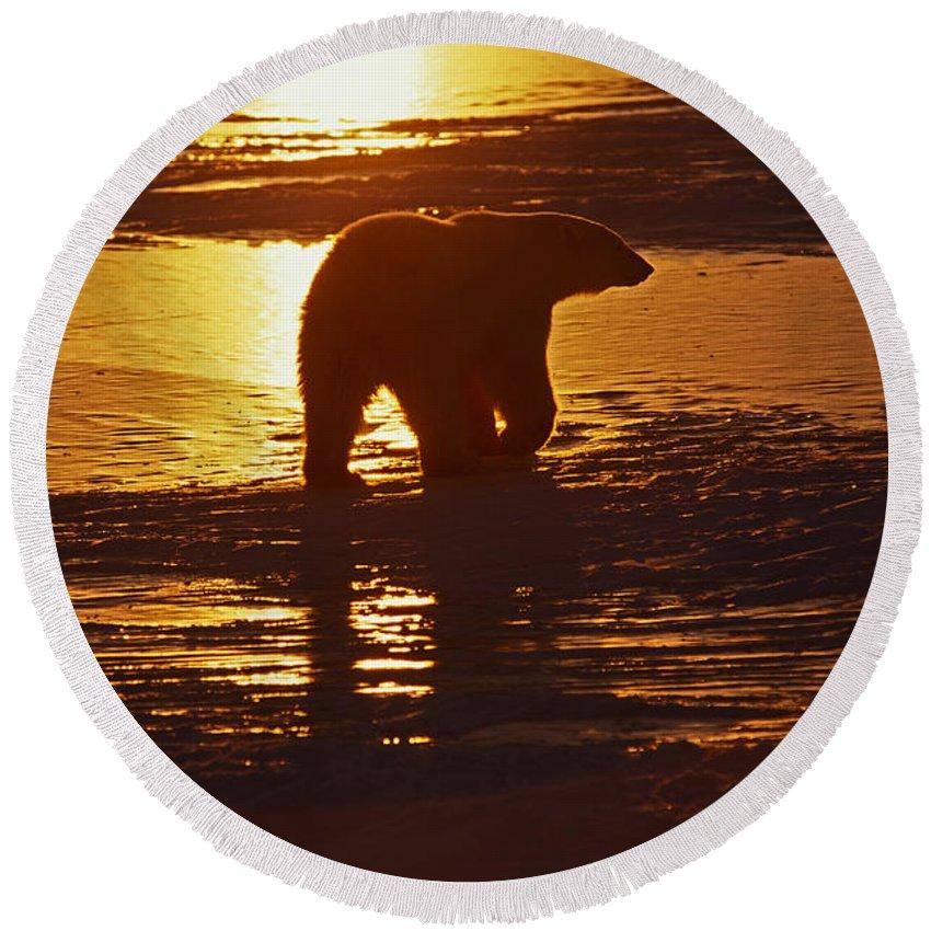 Animal Round Beach Towel featuring the photograph Polar Bear by Ron Sanford