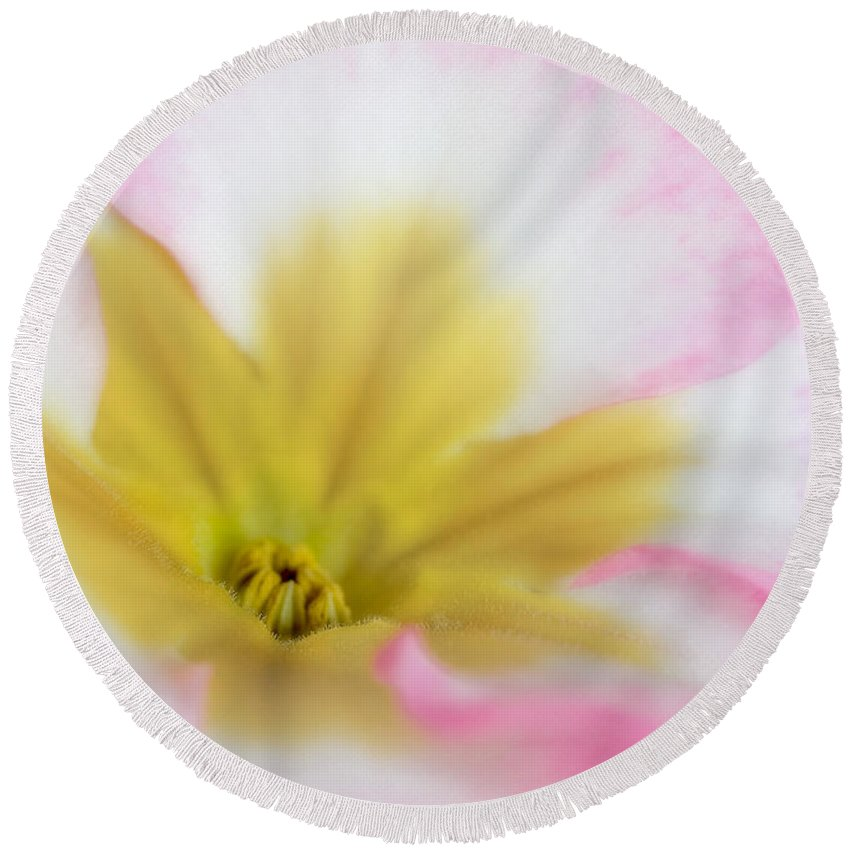 Botany Round Beach Towel featuring the photograph Pollen Nest by David and Carol Kelly