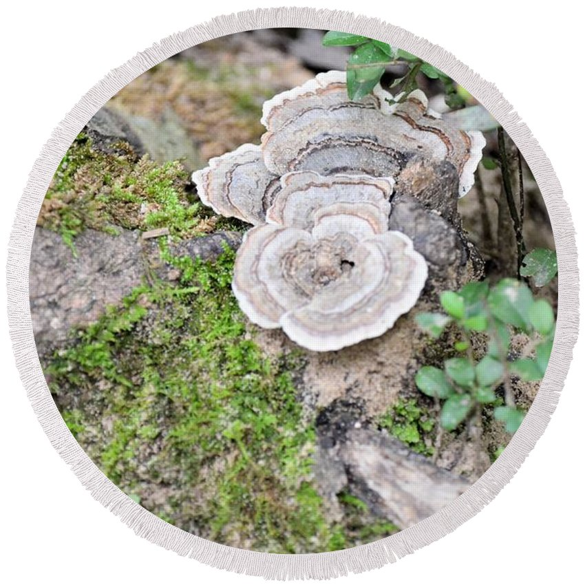 Polypores And Moss Round Beach Towel featuring the photograph Polypores And Moss by Maria Urso